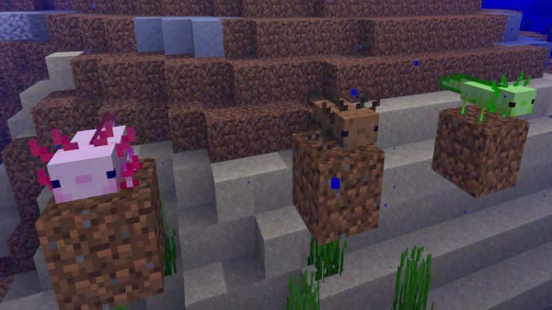 Axolotls (이미지 제공 : Mojang)