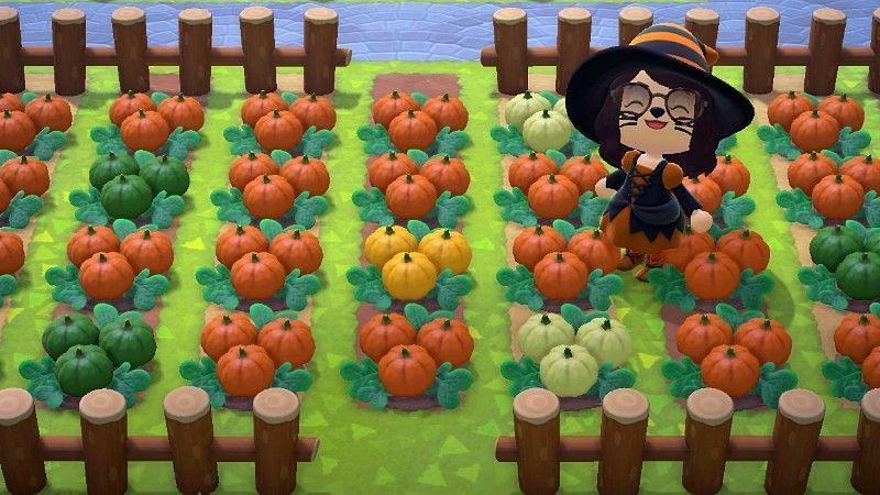 Animal Crossing: New Horizons의 다양한 색상 호박(myPotatoGames를 통한 이미지)